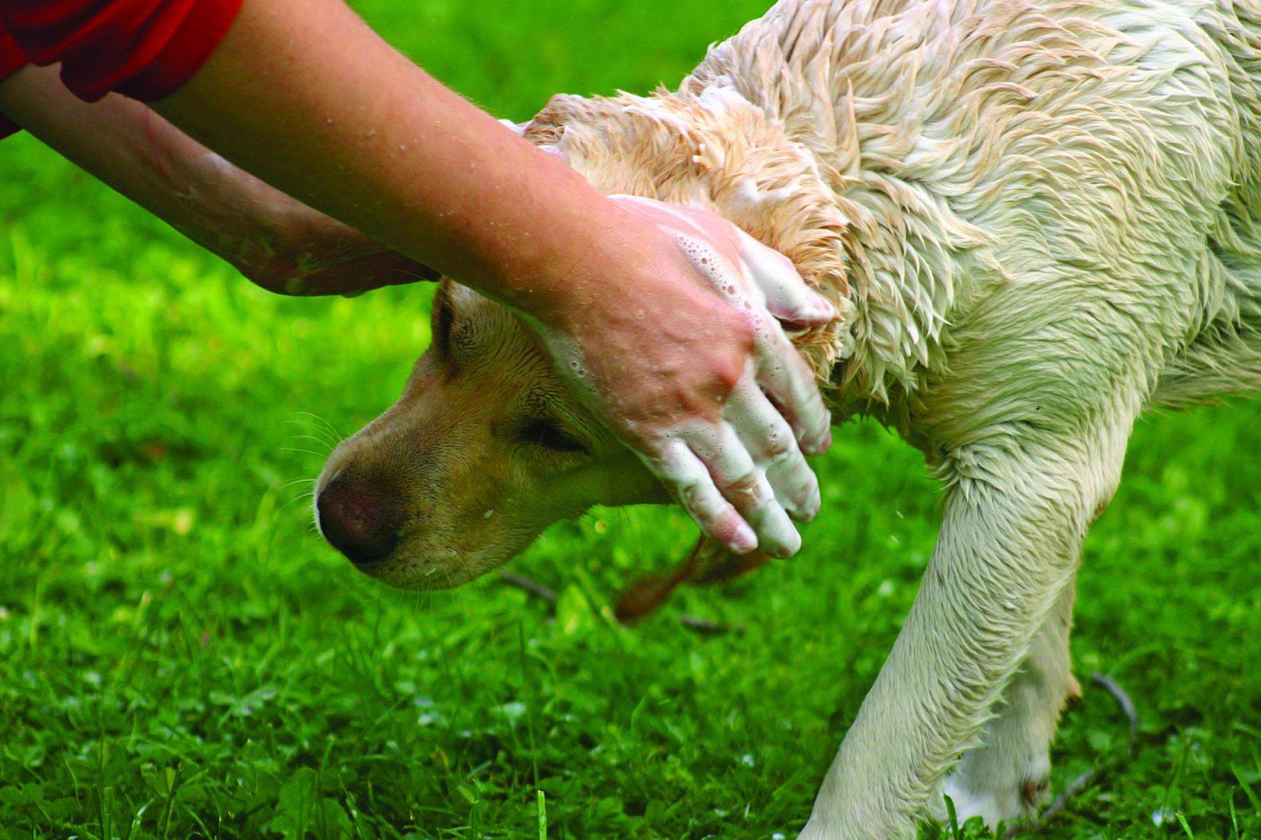 Pet Care Formulation Chemicals